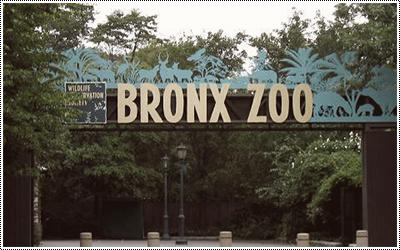 Bronx Zoo 16418679_MVIii