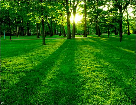 Floresta    - Página 2 15097705_r844C